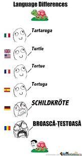 Language Differences Meme - language differences turtle lol pinterest language turtle and
