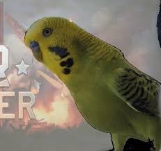 Parrot Meme - create meme parrot war thunder
