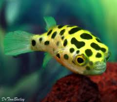 best 25 tropical freshwater fish ideas on tropical