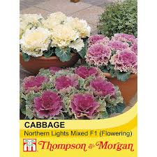 cabbage northern lights mixed f1 hybrid flowering seeds