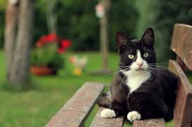 cats bench cat photos gallery for hd 16 9 high definition 1080p