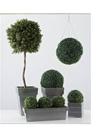 Topiaries Plants - buy boxwood topiary tree from the next uk online shop
