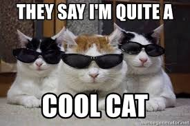 Cool Cat Meme - they say i m quite a cool cat cats in shades meme generator