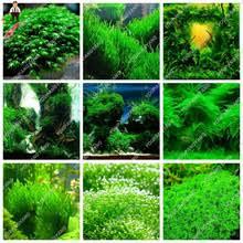 Tropical Aquatic Plants - popular tropical aquarium plants buy cheap tropical aquarium