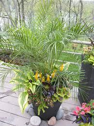 Indoor Garden Containers - 1663 best container gardening ideas images on pinterest
