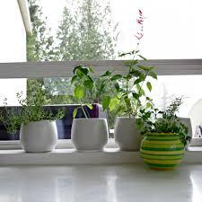window herb harden herb garden kitchen window lawsonreport c14ff6584123
