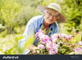 senior woman flowers garden stock photo 126744275 shutterstock