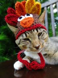 59 best thanksgiving cats images on cat happy