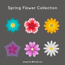daisy vectors photos and psd files free download