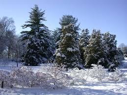 homepage dawes arboretum