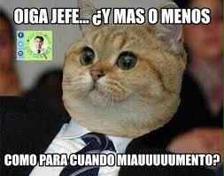 Gato Meme - usuarios de redes celebran con memes el d祗a internacional del gato