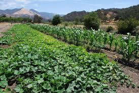 native plants southern california restore the santa barbara botanic garden