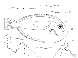 blue tang coloring page free printable coloring pages