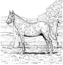 free printable horse coloring pages for adults coloring home
