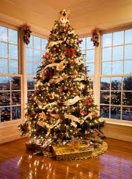 an absolutely stunning christmas tree with white poinsettia and