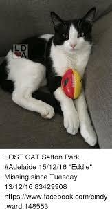 Lost Cat Meme - ld 今 da lost cat sefton park adelaide 151216 eddie missing since