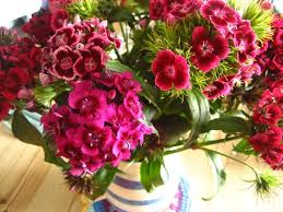 Flowers In A Book - attic24 gorgeous sweet william