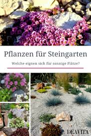 Steingarten Mit Granit The 25 Best Steinpflanzen Ideas On Pinterest