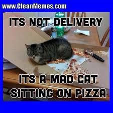 Mad Cat Memes - cat memes clean memes page 3