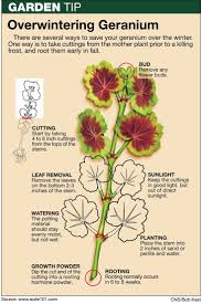 1068 best images about gardening on pinterest