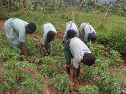 agriculture projects for students hug project garden project