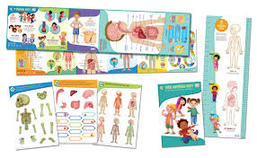 Inside In Spanish by Human Body Parts For Kids In Spanish