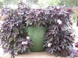 judy s garden in oklahoma gardening