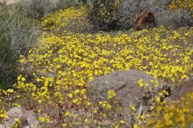 rancho santa ana botanic garden blog