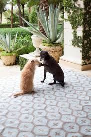 Pet Friendly Area Rugs 115 Best Rugs Images On Pinterest Stairs Carpets And