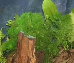 Aquascape Aquarium Plants Stem Aquarium Plants Plant Care And Plant Pictures For Stem Plants