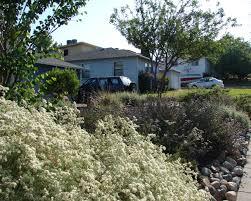 native hedgerow plants make room for hedgerows eve u0027s garden design native edible