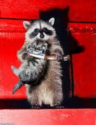 holy crap raccoon in my window brooklynian