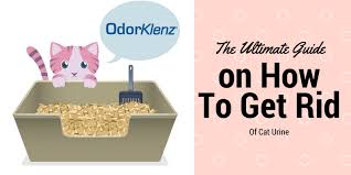 How Do You Get The Urine Smell Out Of Carpet The Ultimate Guide On How To Get Rid Of Cat Urine Smell