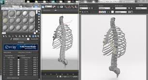 Anatomy Channel Anatomy Torso And Rib Cage Bones By Francescomilanese 3docean