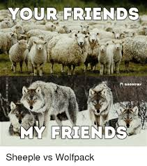 Sheeple Meme - your friends anonews my friends sheeple vs wolfpack friends meme