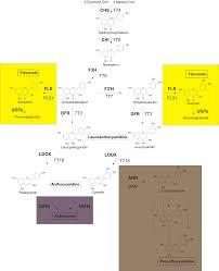 Untersuchungen zu Regulatoren der Flavonoidbiosynthese in