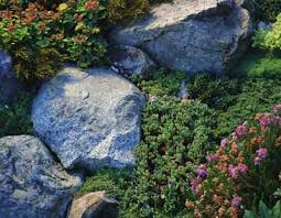 caring for a rock garden how to care for a rock garden