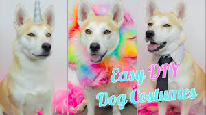 easy diy dog costumes youtube
