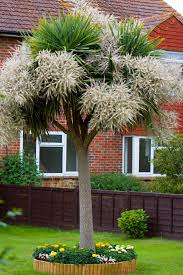 free images nature grass lawn house palm tree flower home