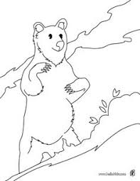 polar bear coloring arctic animals coloring
