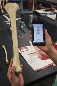 Anatomy And Physiology Apps The Pedagogical Value Of Mobile Devices And Software In The
