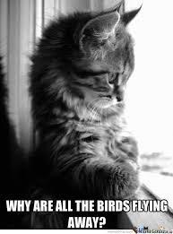 Sad Kitty Meme - because winter is coming sad kitty by cuteasfuck meme center