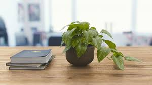 plant on desk how to improve indoor air quality with plants foobot