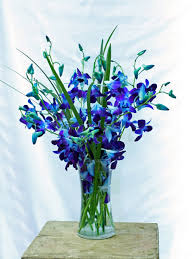 blue dendrobium orchids beautiful blue orchids