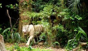 tiger view jungle c in dehradun dehradun tiger view jungle
