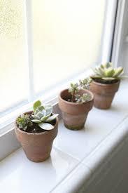 Plants For The Bedroom by Indoor Plants For Bedroom Lemonade Mag Com