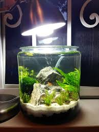 Betta Fish Decorations Best 25 1 Gallon Fish Tank Ideas On Pinterest Fish Tank 3