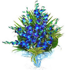 blue orchids for sale blue orchids bunch with blue paper fancy wrapping j k florist