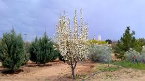 plant pricing santa fe tree farm