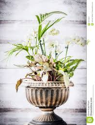 patio indoor plant pot in urn planter at white wooden background